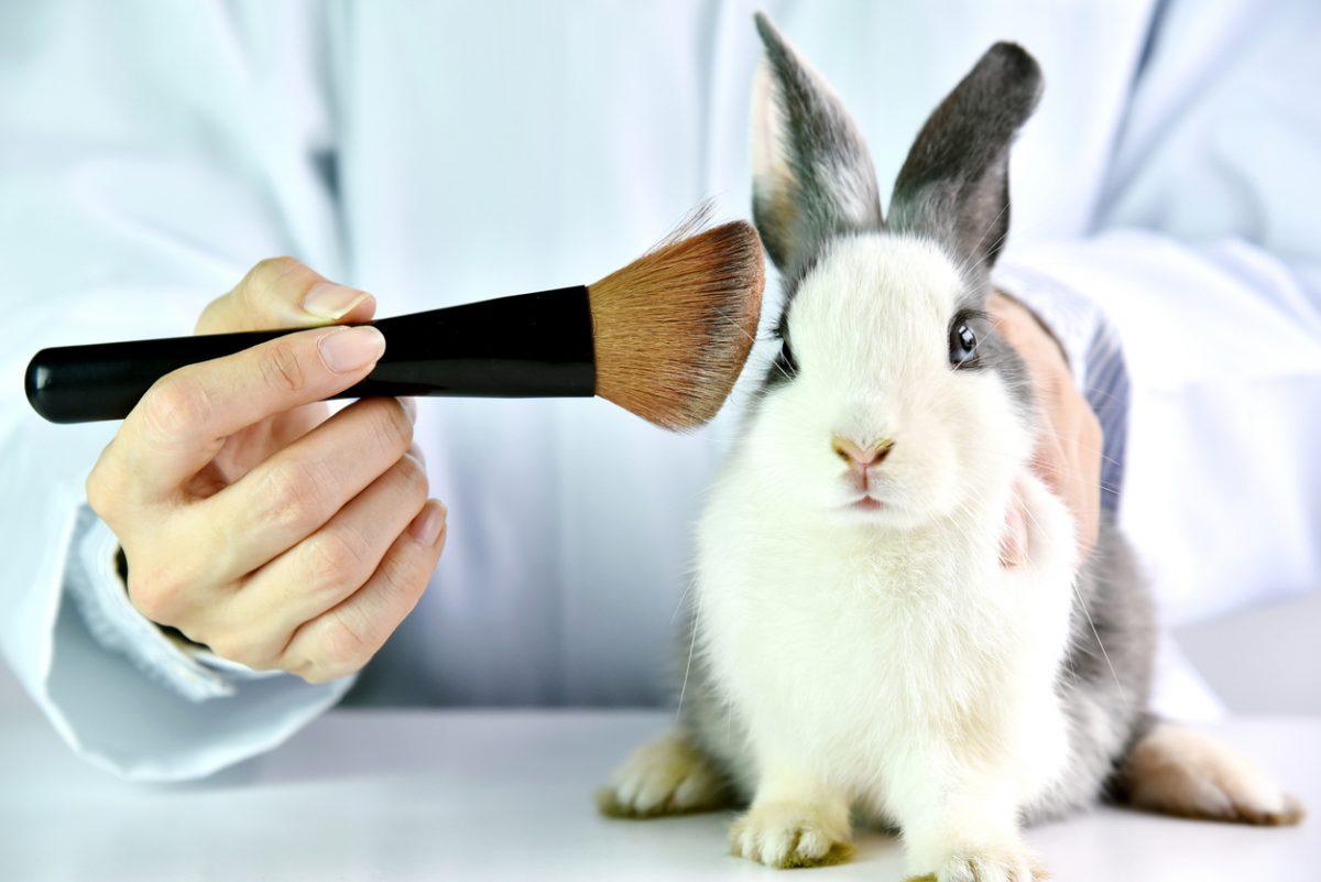 Kiên quyết nói Không với mỹ phẩm thử nghiệm trên động vật