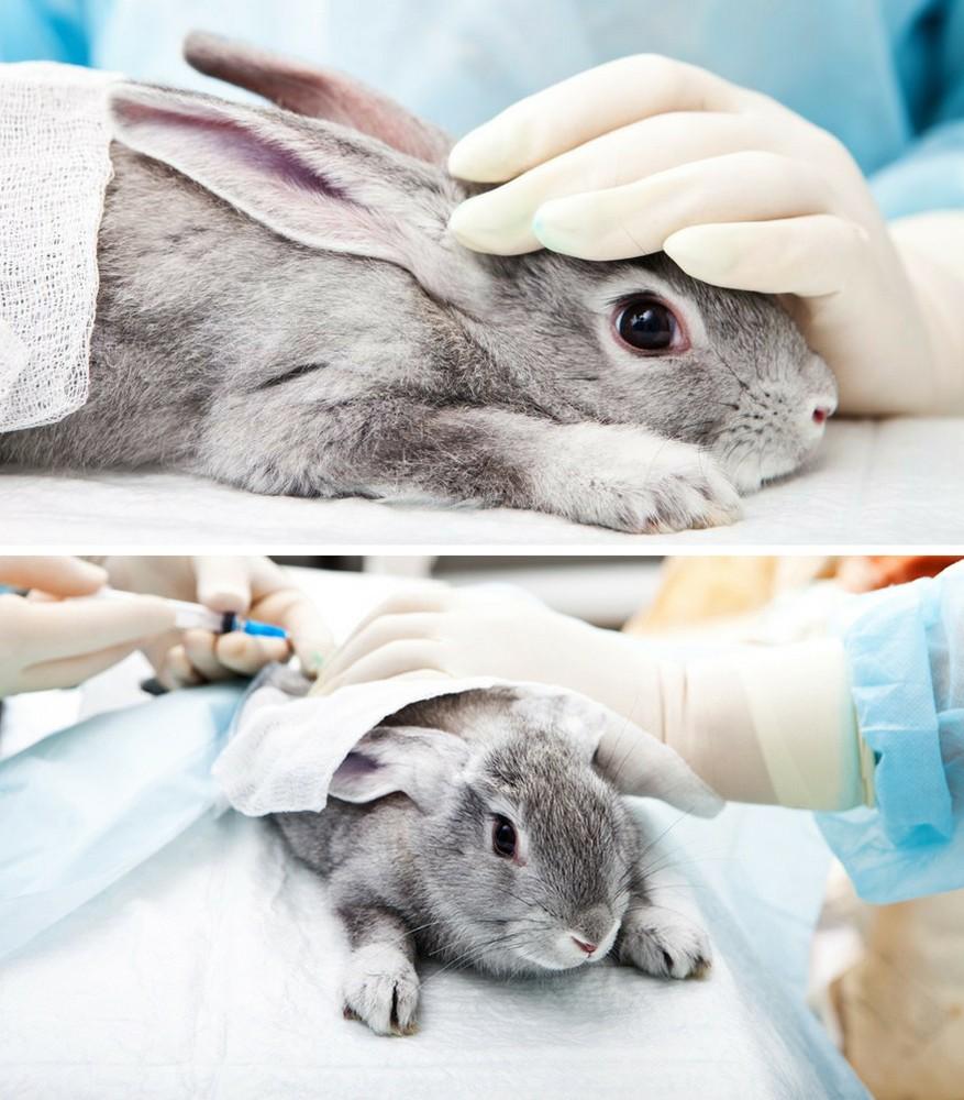 3 lý do bạn nên ưu ái mỹ phẩm KHÔNG thử nghiệm trên động vật? 1